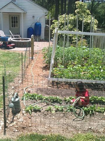 Lb in the garden